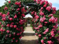 Арки для цветов — конструкция, самостоятельное изготовление, подбор растений + 79 фото