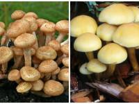 Грибы маслята — как выглядят ранние и поздние виды, сезон, особенности + 75 фото