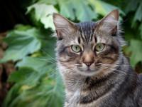Кошка — разновидности, длинна шерсти, болезни и лечение (152 фото + видео)