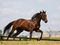 Лошадь — общее описание, ареал обитания, породы, питания и уход + 99 фото