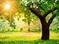 Посадка плодовых деревьев — правила, сроки и схема высадки + 81 фото