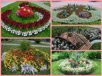 Цветы для клумбы — особенности создания и простые идеи + 66 фото