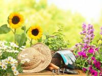 Цветы на даче — 75 фото идеальных сочетаний и советов от ведущих дизайнеров