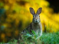 Заяц — внешнее описание, мех, продолжительность жизни, разновидности, рацион + 107 фото