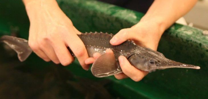 рецепты прикормки рыбы