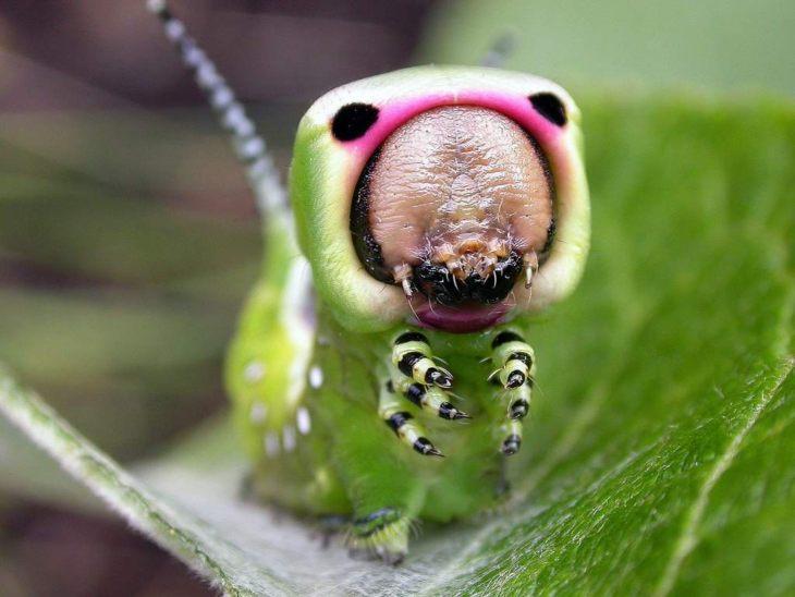 Из чего состоит гусеница