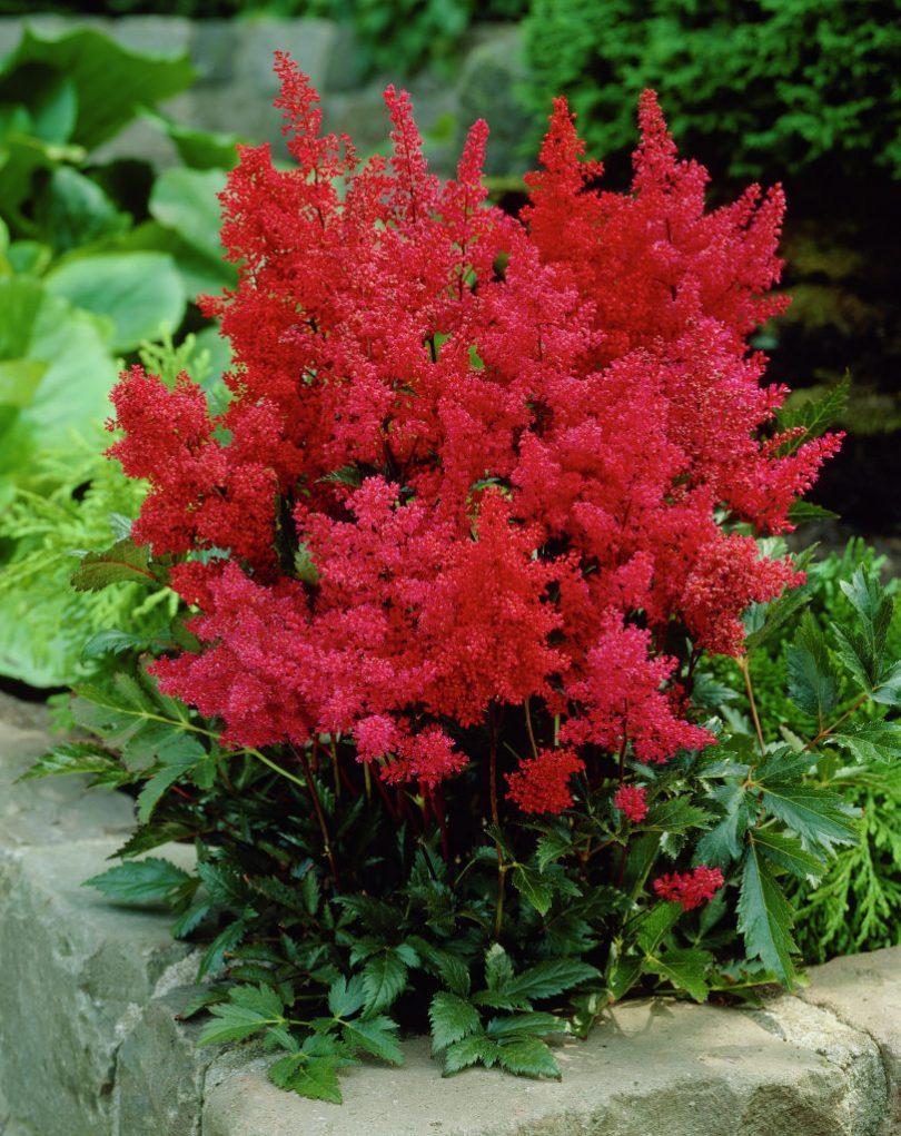 каталог декоративных растений с картинками