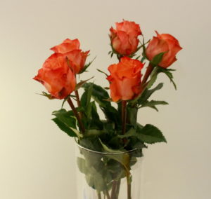 35 сортов чайно-гибридных роз, их описание, фото и видео