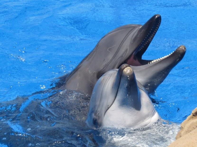 Фото картинки дельфина с дельфиненком