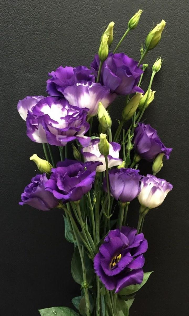 Цветы эустома цена и уход, свадебные букеты
