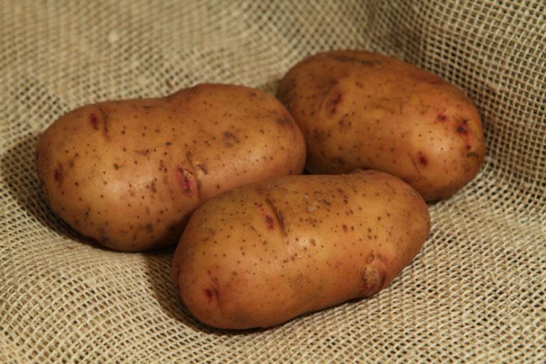 хочется картофель фото и названия хомут предназначен для