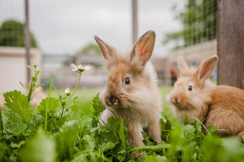 Картинки с кроликами фото