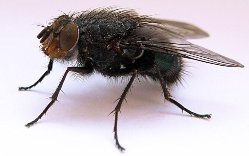 какие есть мухи