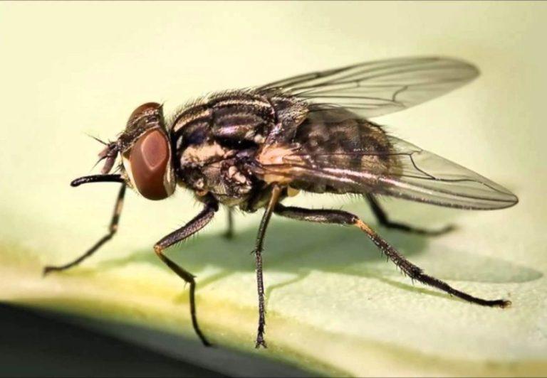 Как вывести мух из квартиры