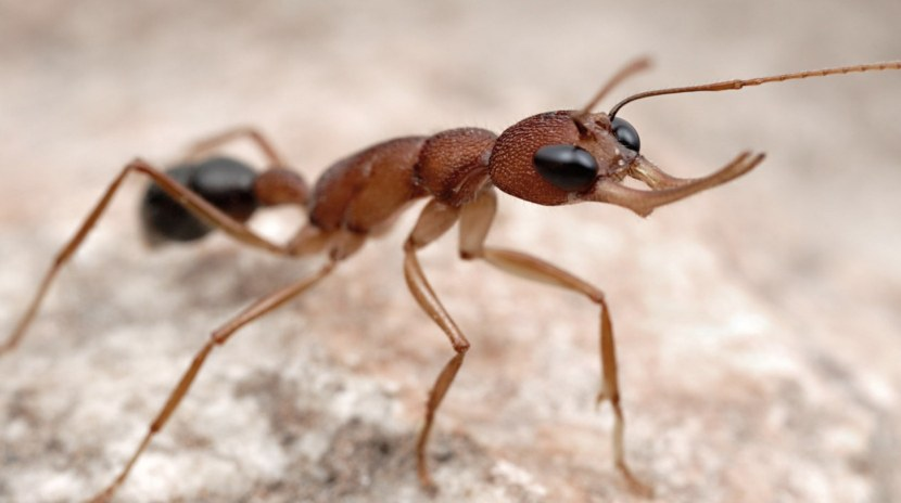 все виды муравьев