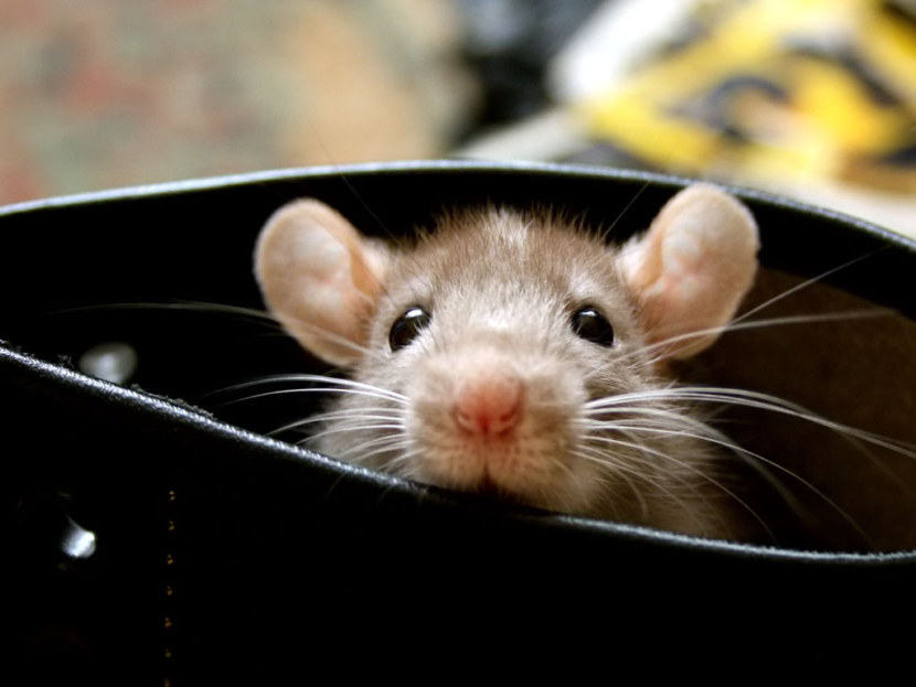 Картинки мышки малютки этот