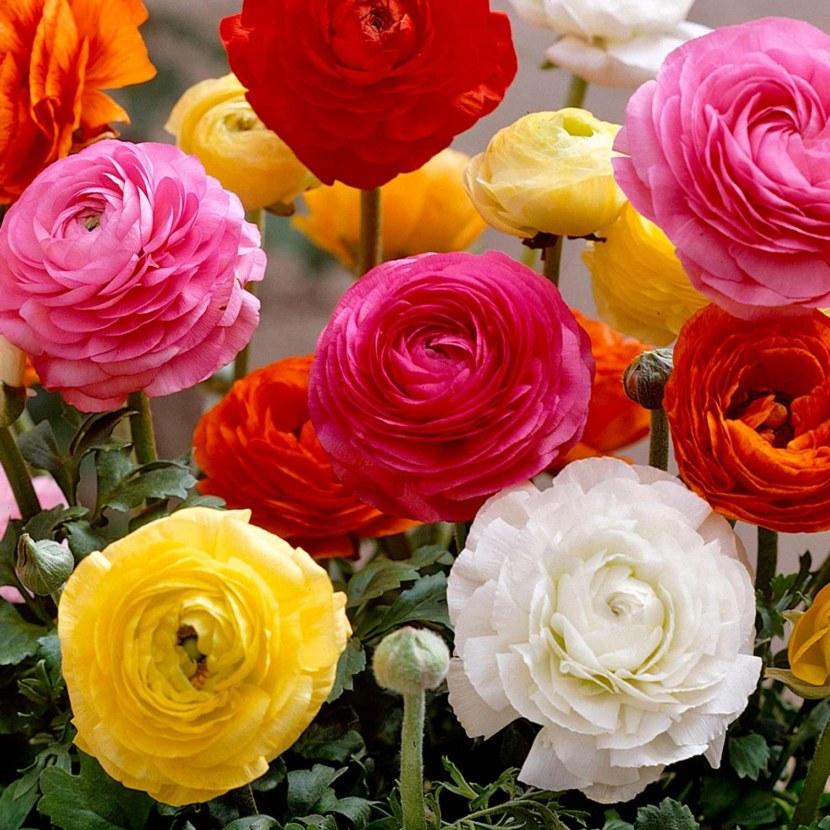 забросили фотографии цветов лютиков пальто воротником-стойкой, шарф