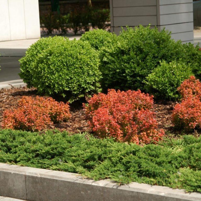 для изменения самшиты где посадить в саду фото комплект входит