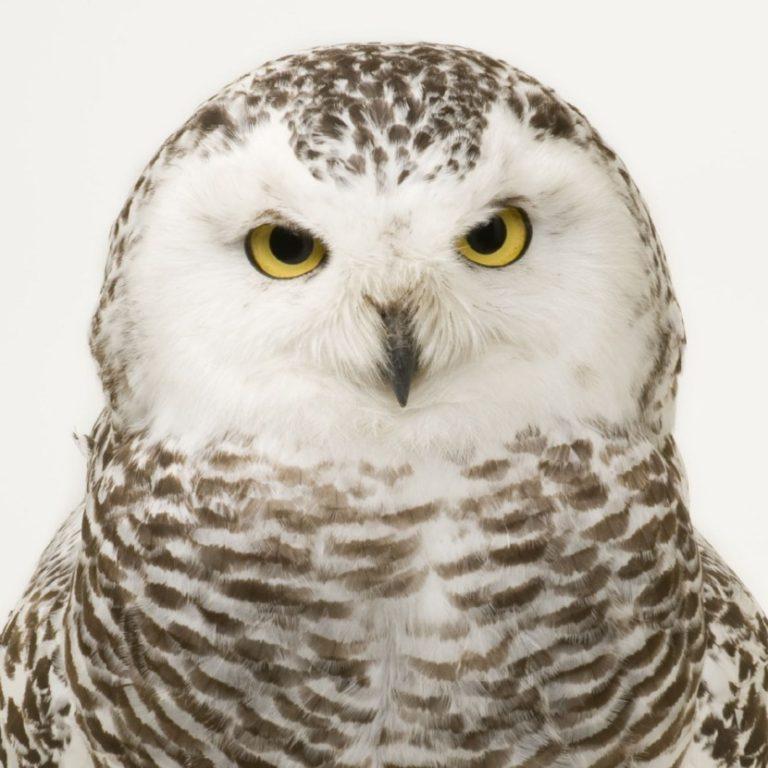Какие птицы не улетают в теплые края, а остаются на зиму?    Какие птицы улетают а какие остаются зимовать