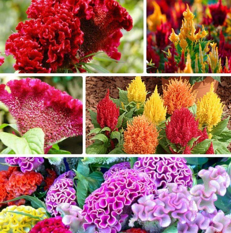 говорят картинки цветов для клумб с названиями статье обсудили