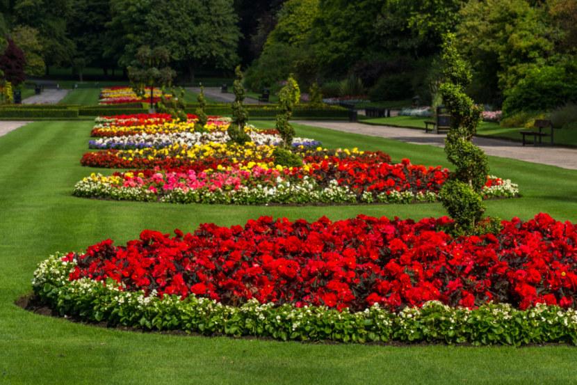 Цветы для клумбы название фото и высота