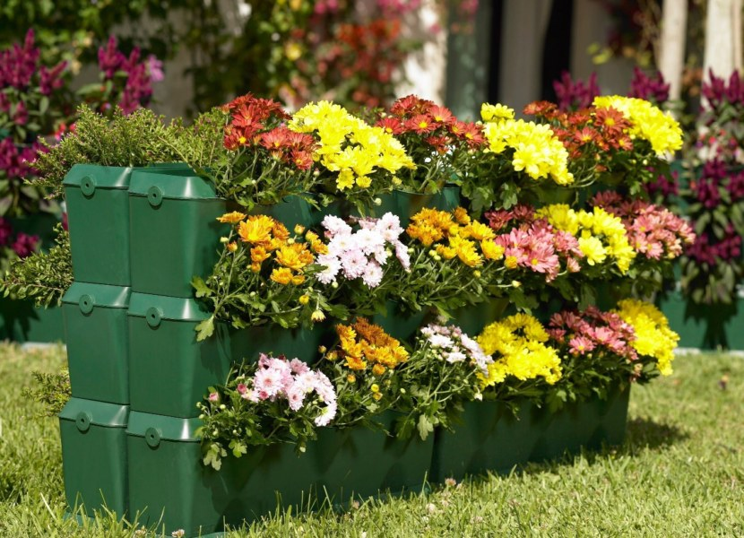 цветы выращиваемые на клумбах