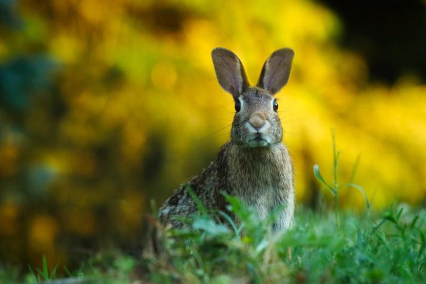 Какие породы зайцев