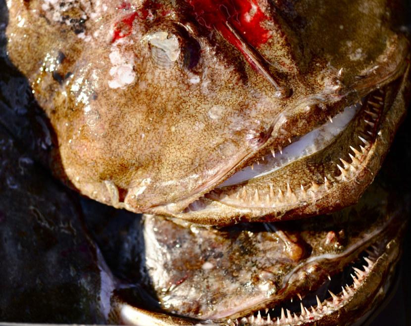 морской черт в японском море фото пятница