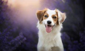 прикольная собака
